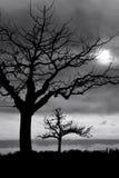 Bäume in der Dämmerung stockfotos