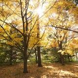 Bäume in der Fallfarbe Stockfotografie