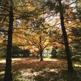 Bäume in der Fallfarbe Lizenzfreies Stockfoto