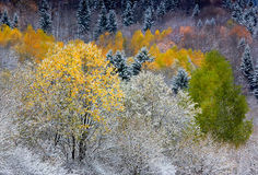 Bäume in der Farbe Lizenzfreies Stockbild