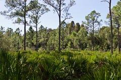 Bäume in der Florida-Bürste lizenzfreie stockbilder
