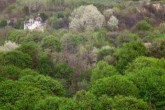 Bäume der grünen Hügel stockfotografie