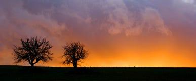 Bäume in der Hintergrundbeleuchtung Stockfoto