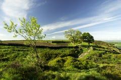 Bäume in der Landschaft stockfotografie