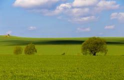 Bäume in der Landschaft Lizenzfreies Stockbild