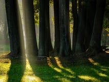 Bäume in der Leuchte Stockbild