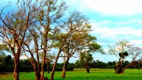 Bäume der Natur Stockbilder