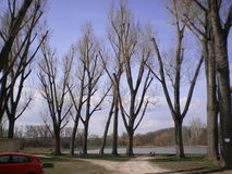 Bäume in der Natur Stockbild