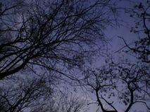 Bäume in der Natur Lizenzfreie Stockfotos