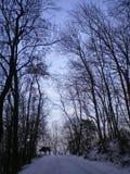 Bäume in der Natur Lizenzfreies Stockfoto