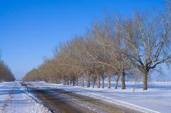 Bäume in der Perspektive entlang einer Straße Lizenzfreie Stockbilder