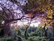 Bäume in der südlichen Universität Stockfoto