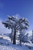 Bäume in der schneebedeckten Landschaft lizenzfreie stockfotos