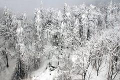 Bäume in der Schneelandschaft Lizenzfreie Stockfotos