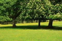 Bäume in der Sommerzeit Stockfotos