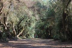 Bäume in der Sommerzeit Stockbild