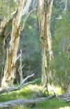 Bäume in der Sonne Lizenzfreie Stockfotos