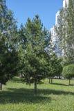 Bäume in der Stadt Stockbild