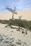 Bäume in der Wüste Lizenzfreies Stockbild