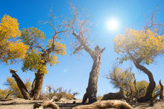 Bäume in der Wüste mit Sonnenlicht und Le Lizenzfreie Stockbilder