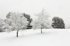 Bäume in der Winterlandschaft Stockfotos