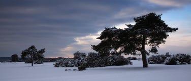 Bäume in der winterlichen Landschaft Stockbild