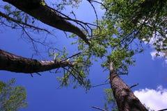 Bäume des Berges lizenzfreies stockbild