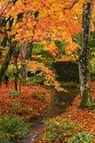 Bäume des japanischen Ahornholzes Stockfotografie