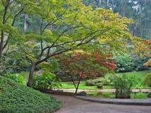Bäume des japanischen Ahornholzes Lizenzfreie Stockbilder