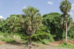 Bäume des Silbers decken und Mandel mit Stroh stockfotos