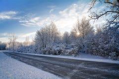 Bäume des verschneiten Winters Stockbilder