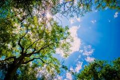 Bäume des Waldes. Stockfotos