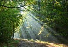 Bäume des Waldes Stockfoto