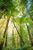 Bäume des Waldes Lizenzfreie Stockfotos