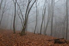 Bäume des Waldes des Nebels I n Stockbilder