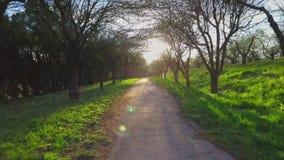 Bäume des Waldes Fliegenabflussrinnen-Baum- des Waldesschattenbild Sonnenaufflackernsonnenuntergang nave stock footage