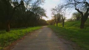 Bäume des Waldes Fliegenabflussrinnen-Baum- des Waldesschattenbild Sonnenaufflackernsonnenuntergang nave stock video footage