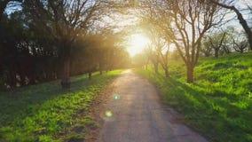 Bäume des Waldes Fliegenabflussrinnen-Baum- des Waldesschattenbild Sonnenaufflackernsonnenuntergang nave stock video