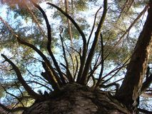 Bäume des Waldes Grüne hölzerne Sonnenlichthintergründe der Natur lizenzfreie stockfotos