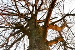 Bäume des Waldes Grüne hölzerne Sonnenlichthintergründe der Natur stockfoto