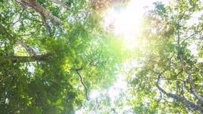 Bäume des Waldes grünes hölzernes Sonnenlicht der Natur Lizenzfreies Stockfoto
