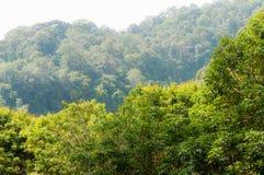 Bäume des Waldes. Natur Lizenzfreies Stockbild