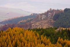 Bäume des Waldes und Hügel Stockfoto