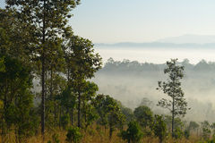 Bäume des Waldes und Nebel Lizenzfreie Stockfotografie