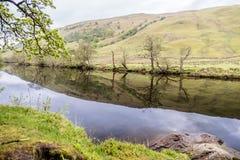 Bäume, die über den Fluss Orchy, Glen Orchy, Schottland nachdenken lizenzfreie stockfotos