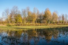 Bäume, die über den See nachdenken Lizenzfreie Stockfotos