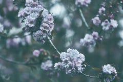 Bäume, die überall blühen Stockfotos