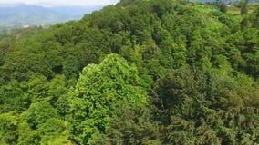 Bäume, die üppig auf Hochländern, Stadt liegt in der Wiese fern gegenüberstellt Meer, Erholungsort wachsen stock footage
