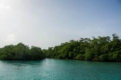 Bäume, die auf den Ozean schwimmen Stockbild