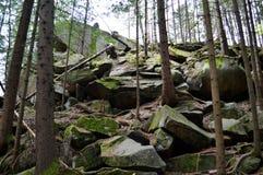 Bäume, die auf den Steinen wachsen lizenzfreie stockbilder